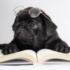 Мопс с книгой