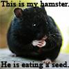 Otabek's hamster