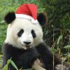 Здравствуй панда НГ