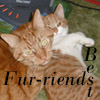Fur friends3
