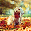 Laura: Autumn dog