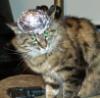 Paranoid cat