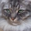 cat_stories_ru