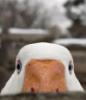 gusev_leha userpic