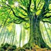 Tree, big