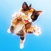 STOCK: kitty jumping