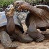 45. Общающиеся черепахи