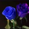bluepurple