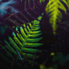 stock → ferns