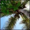 tropikanka userpic