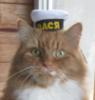 ava-cat