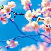Joanna D.: spring