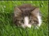 www cat ru