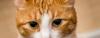 кот - грусть