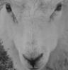 odiosus userpic