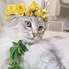 Jo Ann: Spring: Cat w. flower crown