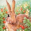 bunny in strawberry patch