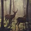 forest_zen userpic