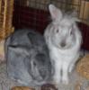 Arwen & Smokey