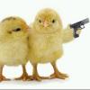 Chicks 4 lyfe
