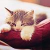 超ちゃ人: cat (猫): chilling