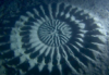 орнамент рыбы-фугу