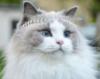 cat_779