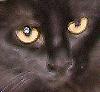 jackiecat userpic