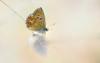 nastia_daniloff