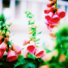 shotsilk userpic