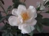 m_olga_88: W.rouse