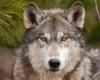 st_wolk userpic
