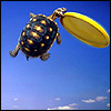 The Little Stowaway: Frisbee turtle!