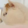 кот как Стасик
