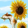 casey: cat sleeping on sunflower