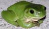 greenfrogger userpic