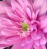 boa_30 userpic