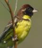 birds_kms