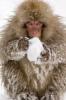 crabby_monkey [userpic]