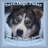 Save_Dogs_Today