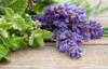 Mint Lavender