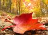 autumn_g_i_r_l userpic