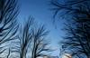 Ветви и небо