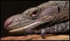 Tom's Reptile Blog: pic#110669547