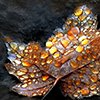 autumn_jewelled leaf