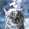 cat snow on head