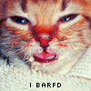 STOCK: cats - barf'd