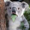 Удивленный медвед