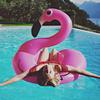 josefine flamingo