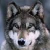 wolfeye userpic